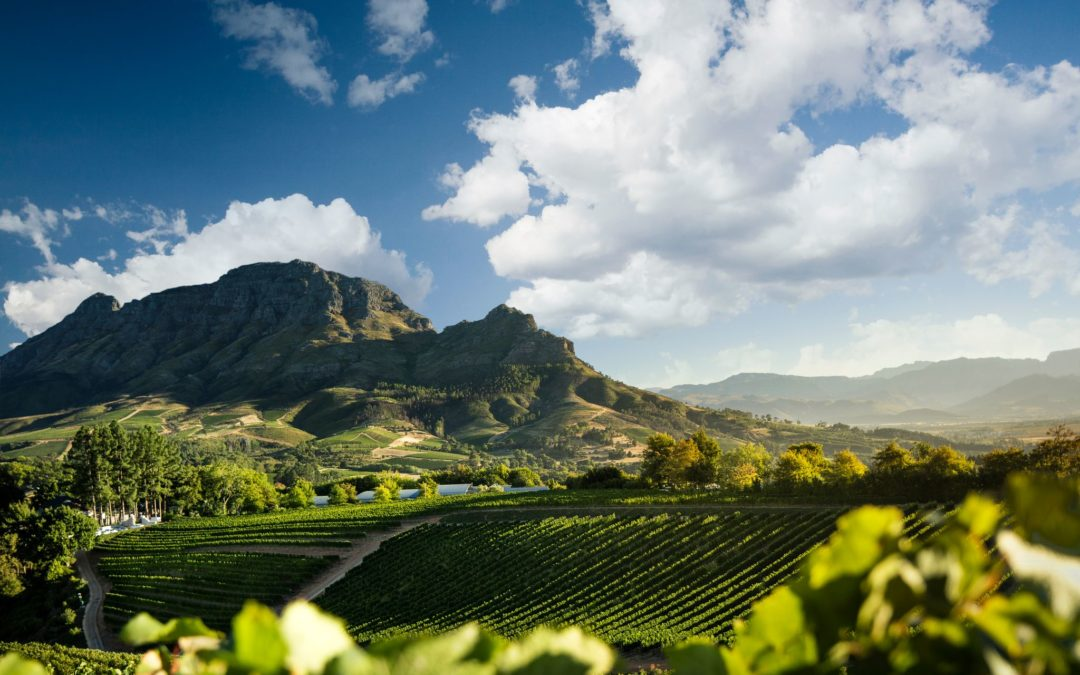 Lifestyle |The Franschhoek  Life is waiting for you!