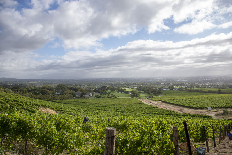 Steenberg Harvest Celebration is a feast for all the senses