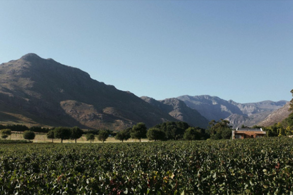 La Roche Estate – Relax and unwind with us in Franschhoek
